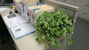 go green in my cubicle